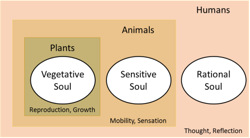 Hierarchy of Aristotle's versions of the soul
