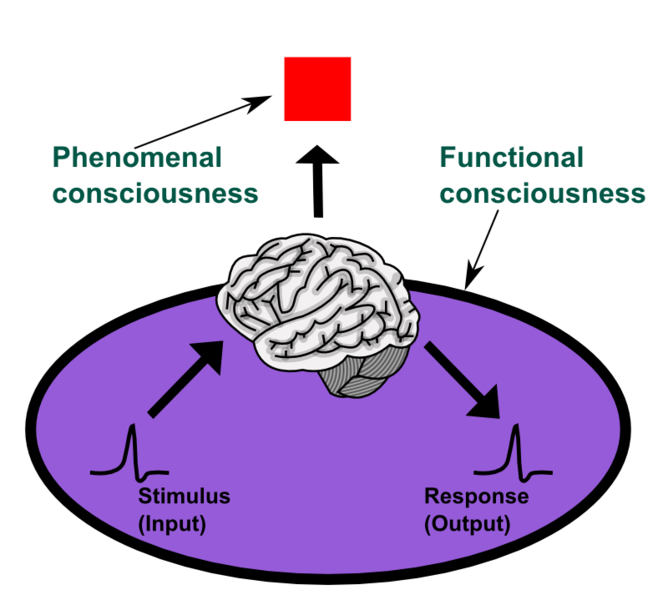 Diagram of Phenomenal and Functional consciousness